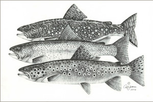 Al Jensen Art: Brook Trout, Rainbow Trout & Brown Trout